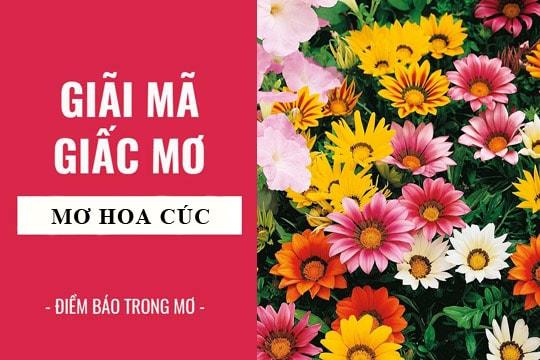 Nam mo thay hoa cuc co y nghia gi, danh con so nao phat tai?